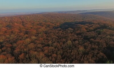 Aerial view of autumn forest at sunset
