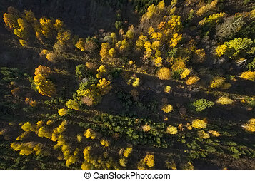 Aerial view of autumn forest. Fall landscape with red, yellow and green trees. Drone photography