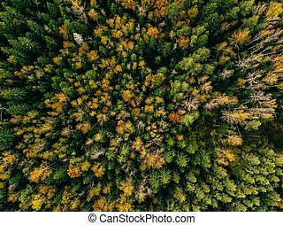 Aerial view of autumn forest. Fall landscape with red, yellow and green trees.