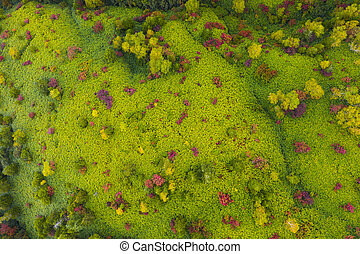 Aerial view of autumn forest in mountain