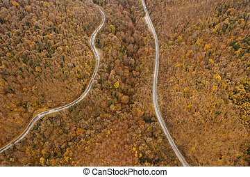 Aerial view of autumn forest road