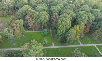 Aerial view of autumn nature trees in the park