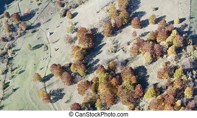 Flying drone over foliage tree and stacks of hay - Aerial...
