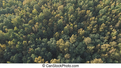 Aerial view of autumn trees in forest in september