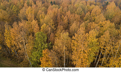 Aerial view of autumn yellow forest with mixed trees