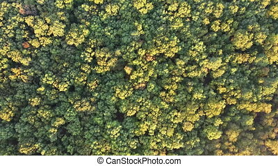 Aerial view of autumnal deciduous forest view of tree branches with autumn branch with yellow leaves colors of foliage in park