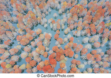 aerial view of bald cypress forest in lake