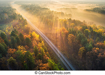 Aerial view of beautiful railroad in autumn forest in sunrise