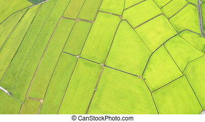 aerial view of Beautiful Rice Fields in taitung . Taiwan