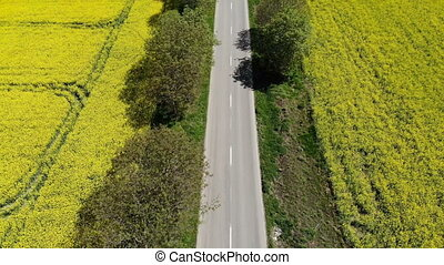 Aerial view of beautiful road in a yellow field with rapeseed
