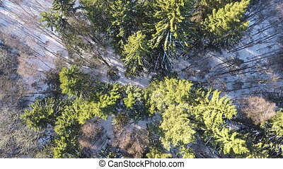 Aerial view of birch and spruce trees in winter forest