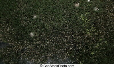 Aerial view of bog lands with white herons nesting place...