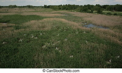 Aerial view of bog lands with white herons nesting place