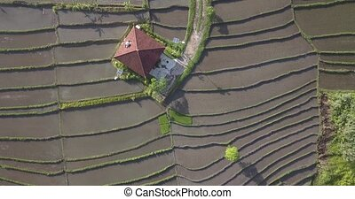 Aerial view of building in rice fields