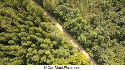 Aerial view of car driving on country road in forest and mountains