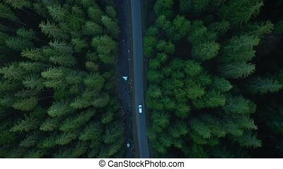 Aerial view of car riding on the road in the coniferous forest among the mountains