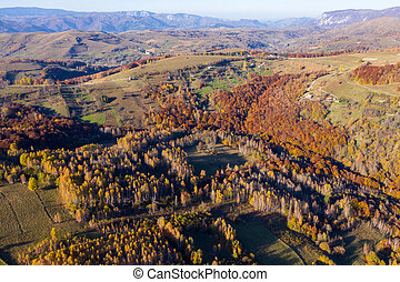 Aerial view of colorful autumn forest