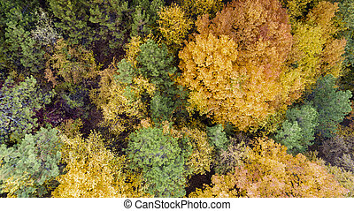 Aerial View of Colorful Forest
