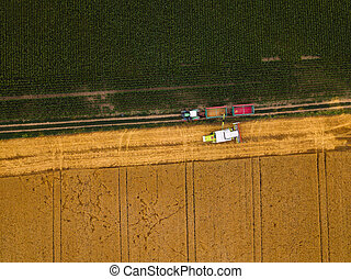 Aerial view of combine harvester unloading harvested wheat