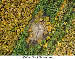 Aerial view of coniferous and deciduous trees