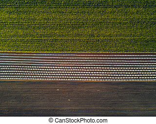 Aerial view of cultivated field from drone