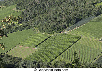aerial view of cultivated fields and vineyards