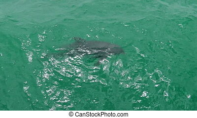 aerial view of dolphin - aerial view of a dolphin swimming...