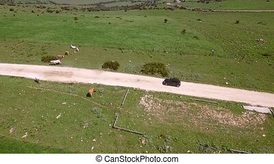 Aerial View Of Driving Car On Hilly Terrain - View from...
