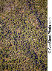 Aerial view of drone, with typical Portuguese forest, crown of trees, pines and oaks