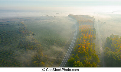 Aerial view of early morning mist over traffic among forest trees