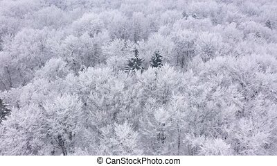 Aerial view of fairy snow covered trees in winter