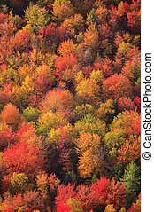 Aerial view of fall foliage in Vermont