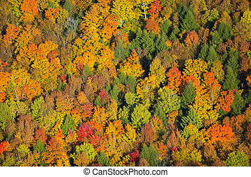 Aerial view of fall foliage in Vermont. - Aerial view of...
