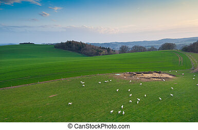 Aerial view of farm.