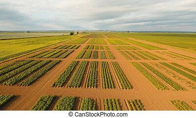 Aerial view of farmland.
