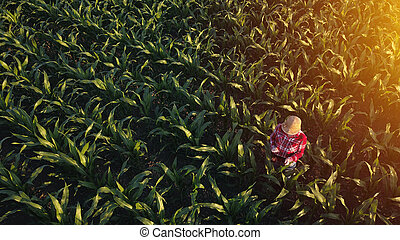 Aerial view of female farmer with tablet in corn field