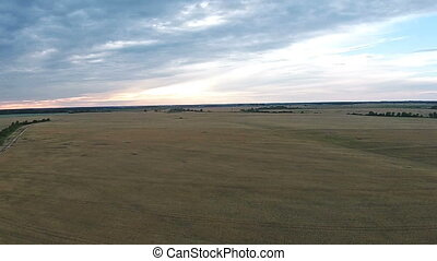 Aerial view of field with wheat at sunset