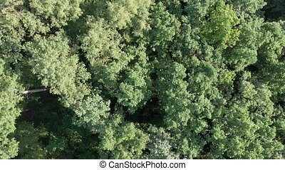 Aerial view of flying over a beautiful green forest in a...