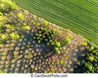 Aerial view of forest and fields.