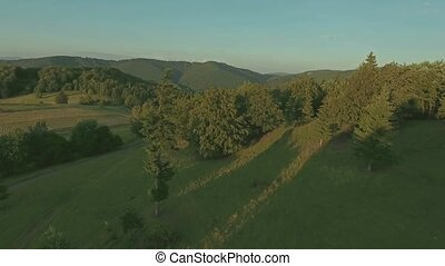 Aerial view of forest and green grassland, summer day.