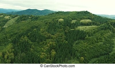 Aerial view of forest and green grassland, summer day. -...