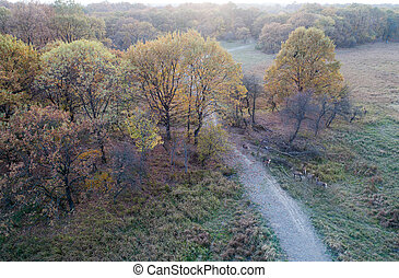 Aerial view of forest and wild animals