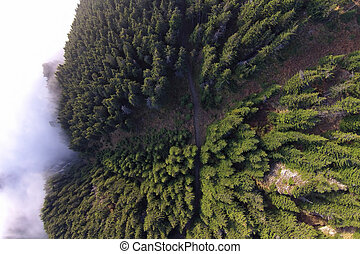aerial view of forest from the drone