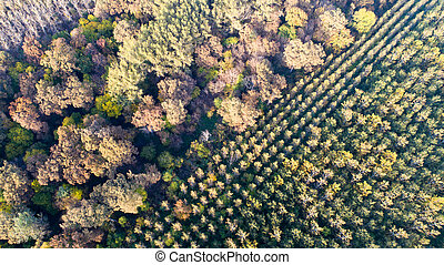 Aerial view of forest in autumn