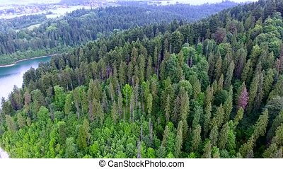 aerial view of forest in hills