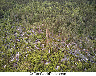 Aerial view of forest in Karelia