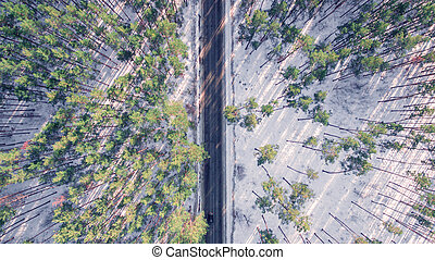 Aerial view of forest in the winter. Landscape - Panorama of...