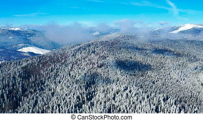 Aerial view of forest in winter: Frozen trees and snow...