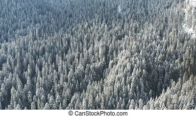 Frozen trees and snow covered evergreen forest - Aerial view...