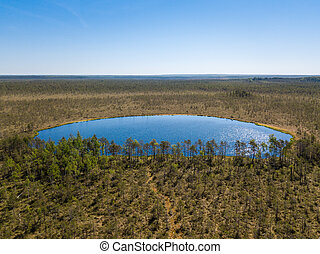Aerial view of forest lake in swamp
